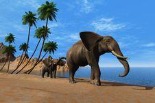 Free Elephants. Royalty Free Stock Image - 21319826