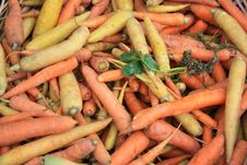 Free Carrots Stock Photos - 21319873