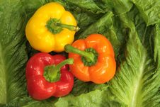 Free Fresh Bell Peppers Royalty Free Stock Photo - 21326055
