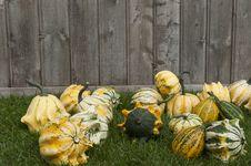 Free Decorative Pumpkin Stock Image - 21327851