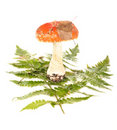Free The Fly Agaric Costs On Leaves Stock Photography - 21336902