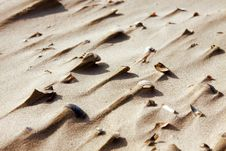 Free Background Of Sand And Shells Stock Images - 21330054