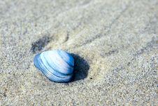 Free Blue Seashell Royalty Free Stock Photography - 21330067
