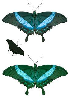 Free Butterflies Stock Photos - 21331153