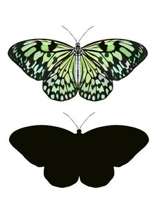 Free Butterflies Stock Images - 21331154