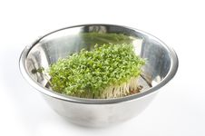 Free Cress Royalty Free Stock Images - 21332879