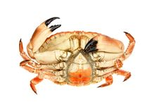 Free Crab Underside Stock Photography - 21336752