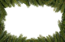 Free Spruce Background Royalty Free Stock Photo - 21337165