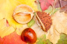 Free Autumn Decorations Stock Photos - 21337733