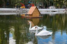 Free Swan Lake Royalty Free Stock Images - 21337919