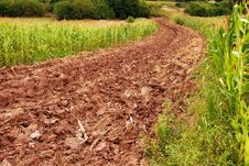 Free Plowed Field Royalty Free Stock Photography - 21338897