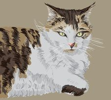 Free Illustrated Portrait Of A Cat Royalty Free Stock Photography - 21342247
