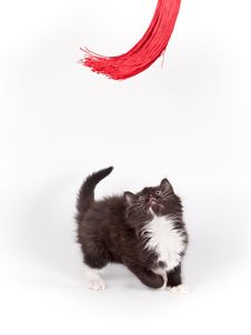 Free Brown Kitten Playing With Tassel On White Stock Photography - 21343582