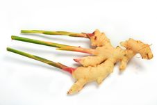 Free Thailand Ginger Royalty Free Stock Photos - 21344578