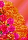 Free Сarnation Flowers Royalty Free Stock Photo - 21354995