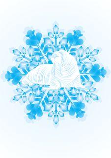 Free Walrus On The Snowflake Stock Photo - 21358080