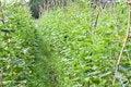 Free Vegetable Garden Stock Images - 21363684