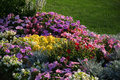 Free Flowerbed. Stock Photos - 21367033