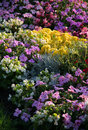 Free Flowerbed. Royalty Free Stock Image - 21367056