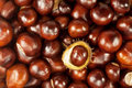 Free Many Beautiful Shiny Brown Chestnuts As Texture Royalty Free Stock Photos - 21369188