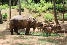 Free Indian Rhinos Stock Images - 21361264