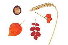 Free Attributes Of Autumn Closeup On White Background Stock Images - 21362644