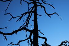 Free Silhouette Of A Dead Tree Stock Images - 21363664