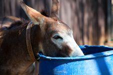 Free Donkey (2). Royalty Free Stock Image - 21366166