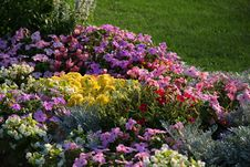 Flowerbed. Stock Photos