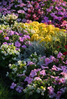 Flowerbed. Royalty Free Stock Image