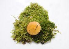 Free Suillus Mushroom On Moss. Royalty Free Stock Photos - 21369478