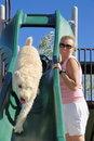 Free Dog On Slide Stock Image - 21371901