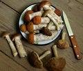 Free Mushrooms Royalty Free Stock Photos - 21377378