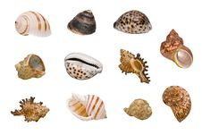 Free Seashells Royalty Free Stock Photos - 21370468