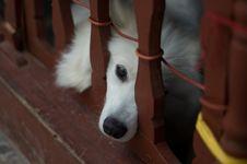 Free Dog Stock Image - 21371591