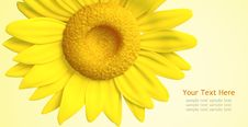 Free 3D Sunflower And Background Royalty Free Stock Images - 21371909