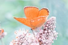 Free Butterfly Close Up Stock Photo - 21373570