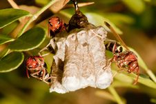 Free Hornet Nest Stock Photography - 21373662