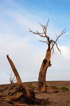 Free Dead Tree In Desert Stock Images - 21376064