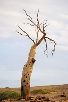 Free Dead Tree In Desert Royalty Free Stock Images - 21376099