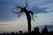 Free Dead Standing Tree In Sunset Stock Photos - 21376253