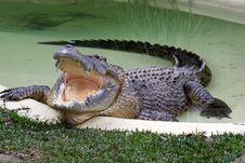 Free Crocodile Pool. Stock Photography - 21376662