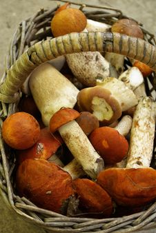 Basket With Mushrooms Aspen Royalty Free Stock Photography