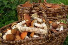Two Baskets Of Mushrooms Royalty Free Stock Photography