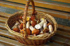 Basket Of Mushrooms Royalty Free Stock Images