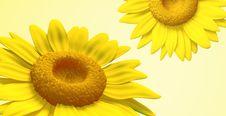Free 3D Sunflower Stock Image - 21379241