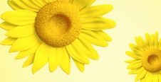 Free 3D Sunflower Royalty Free Stock Photos - 21379268