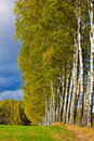 Free Autumn Landscape With Birches Stock Images - 21388044