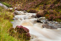 Free Mountain Stream And Heather Stock Image - 21389411