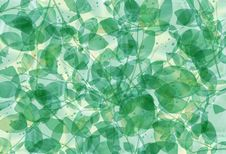 Free Green Leaves Royalty Free Stock Image - 21381446